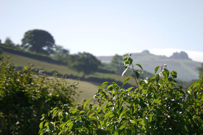 Garden view to Haytor, Dartmoor